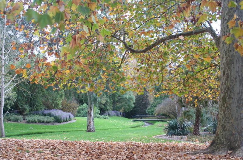 Autumn in May in Adelaide's botanical gardens